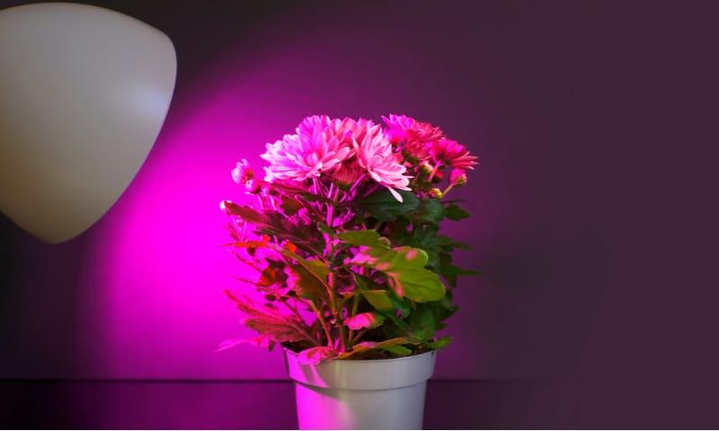 How to buy grow lighting
