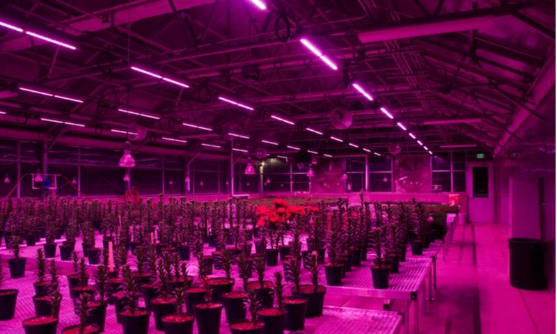 How to buy grow lights